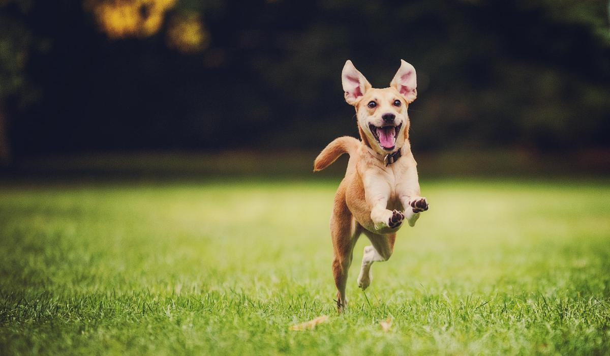 happy_dog_running_by_500px
