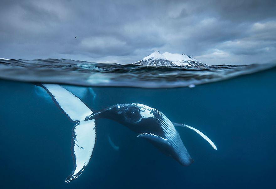 velryby2