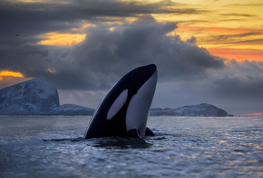velryby11