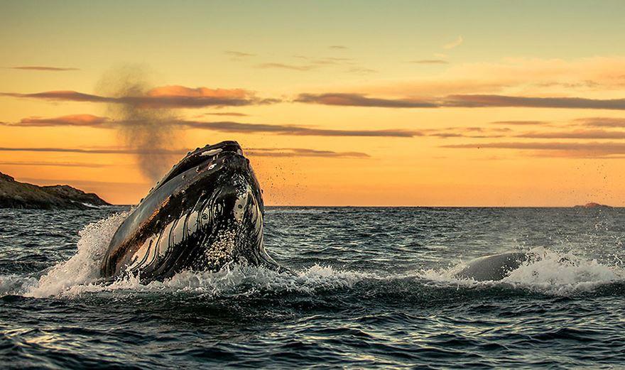 velryby13