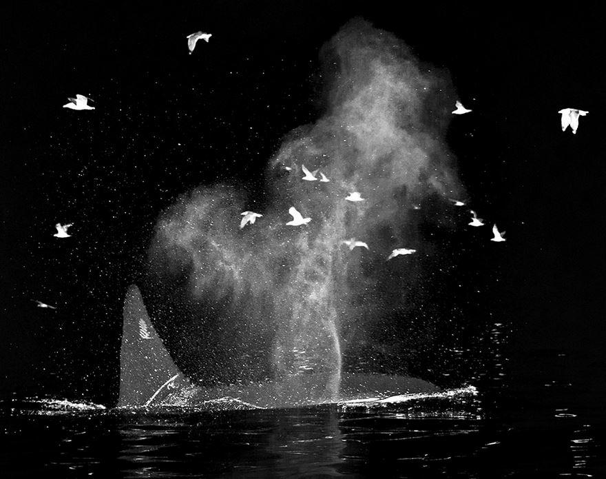 velryby16