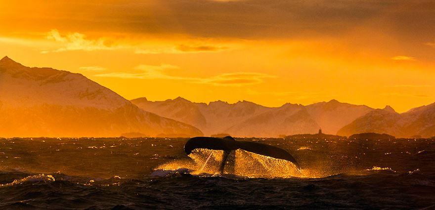 velryby18