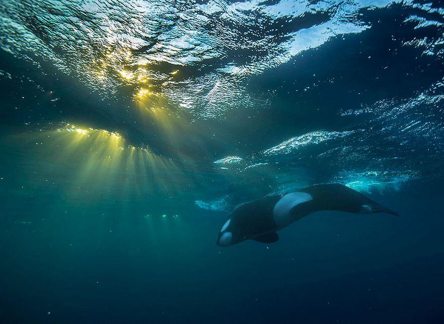 velryby19