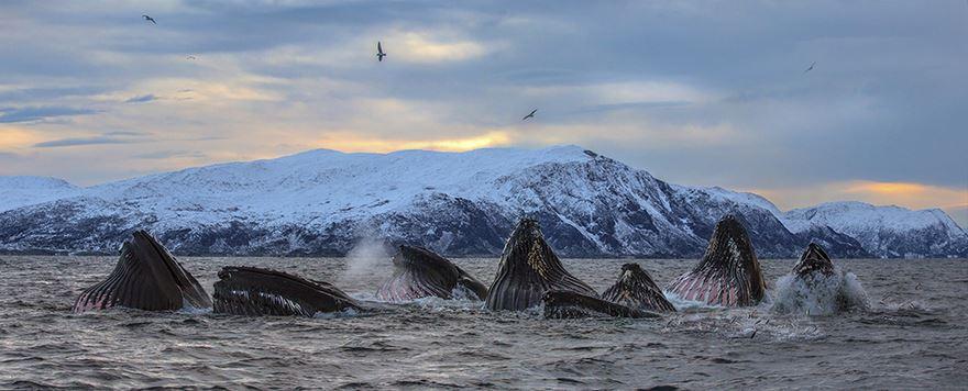 velryby20