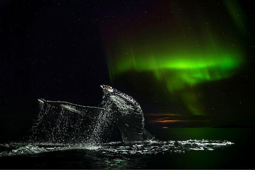 velryby3