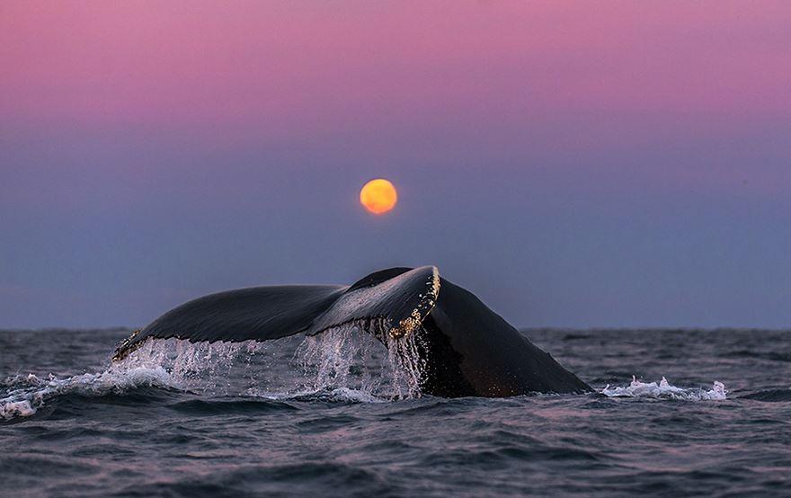 velryby8