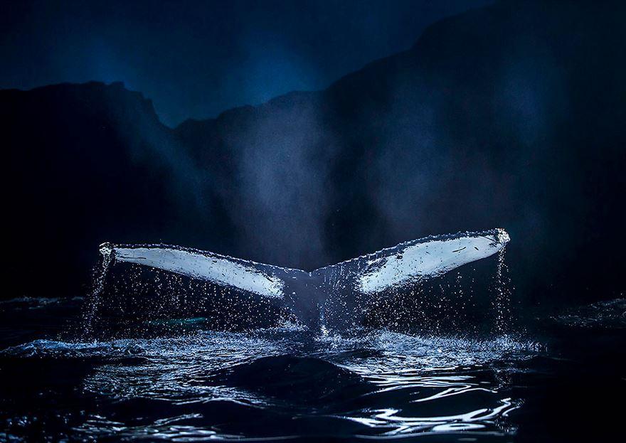 velryby10