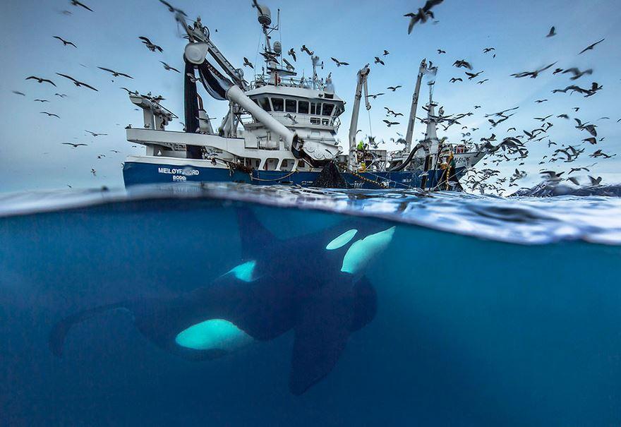 velryby1