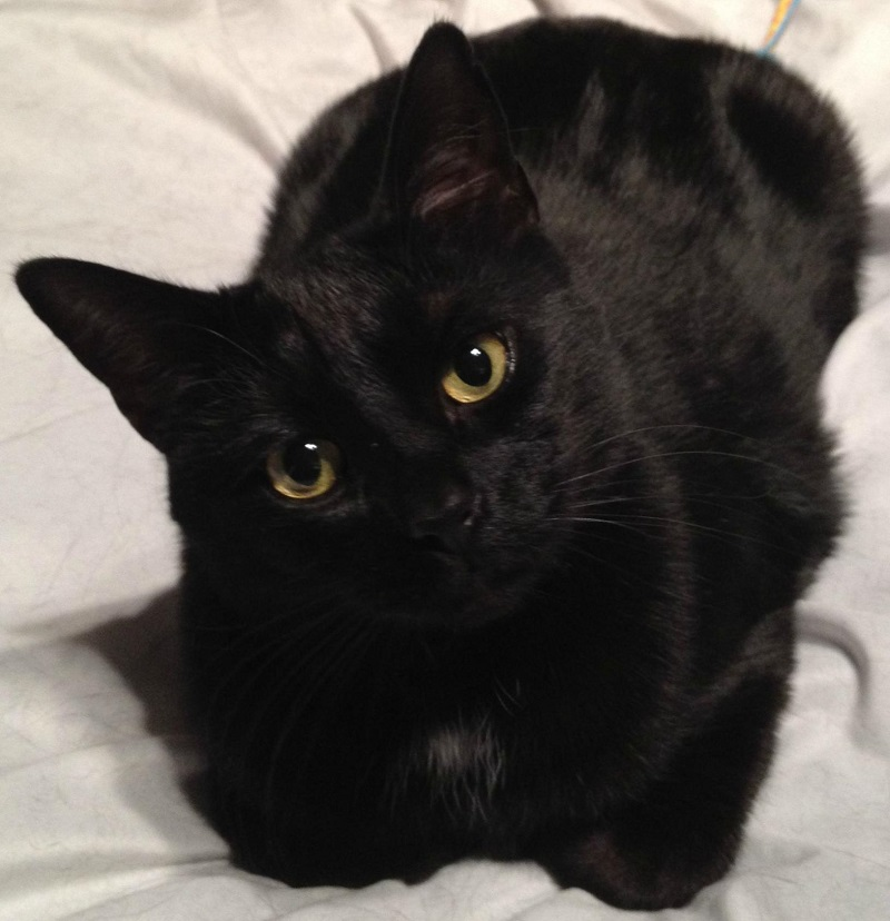 черный кот с желтыми глазами фото