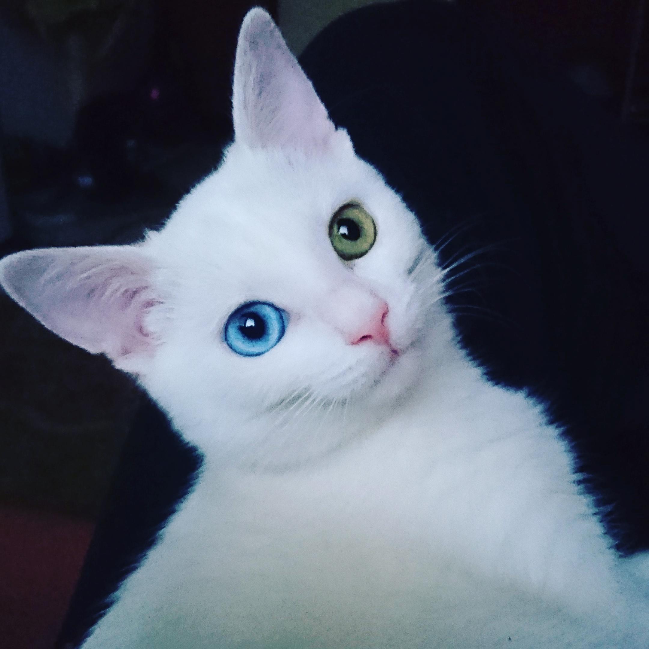 Timmy má heterochrómiu - dvojfarebné oči