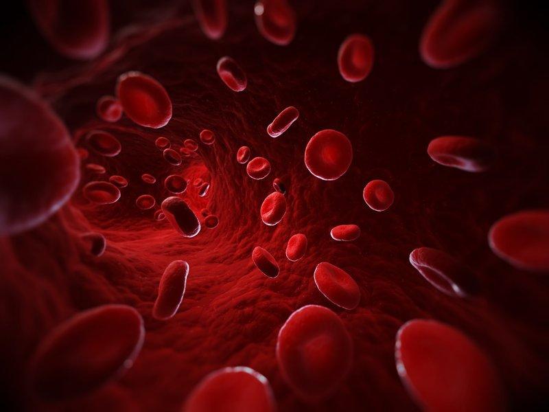Výsledok vyhľadávania obrázkov pre dopyt blood type