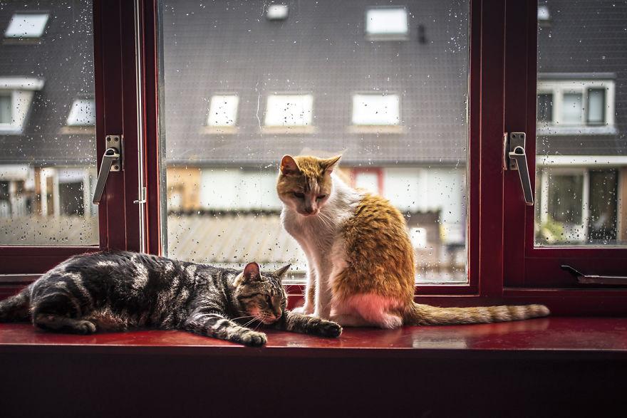 Veľká mačička horúce fotky