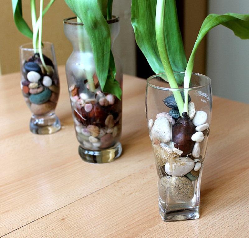 как вырастить тюльпаны в воде