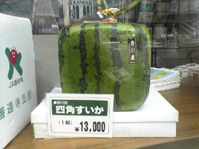 japan melon photo