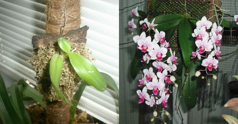 presádzanie orchideí na bloku