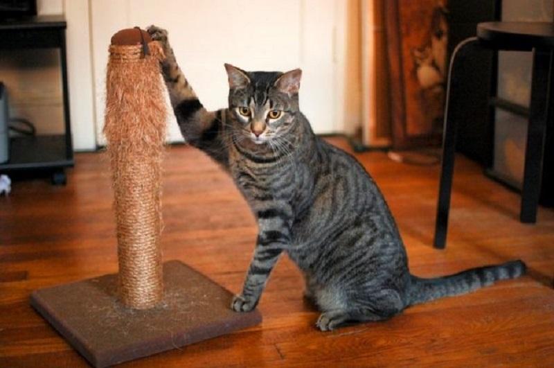 Všetky mačka škriabe, ktoré robia