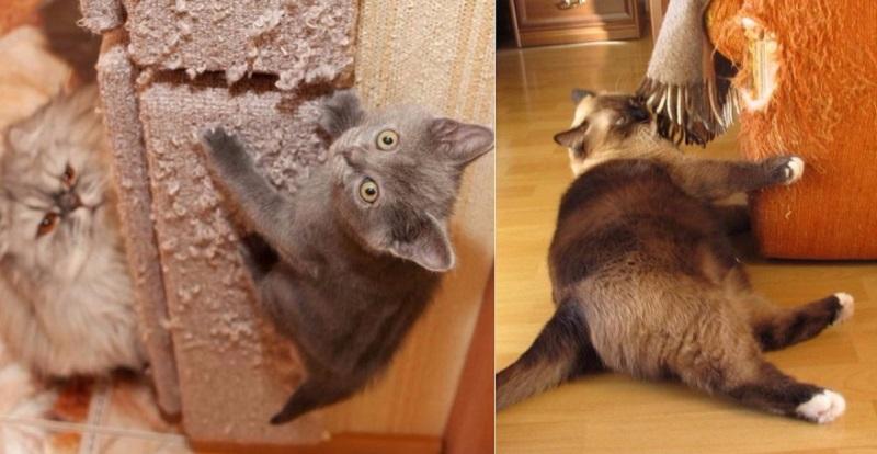 mačka poškriabaniu gauč robiť