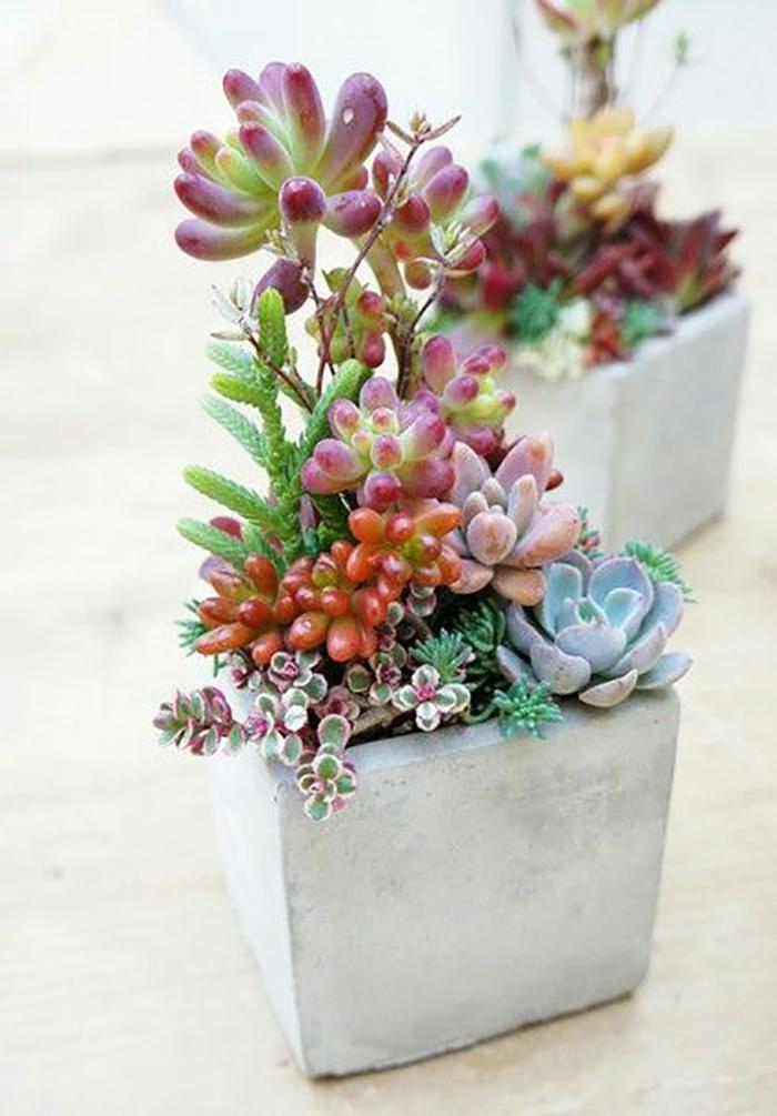 цветущие кактусы и суккуленты
