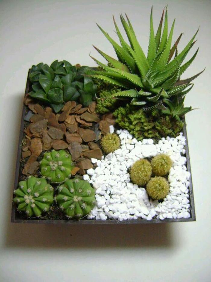 кактусы и суккуленты виды