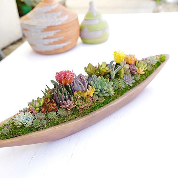 кактусы и суккуленты в аквариуме