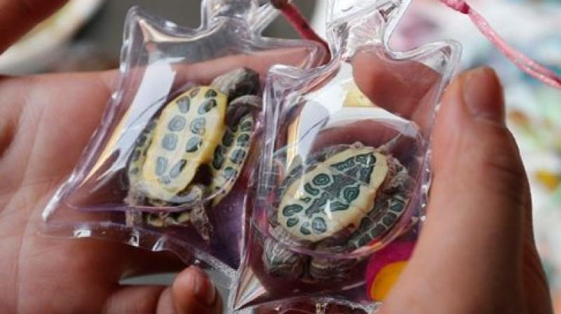 http://www.deccanchronicle.com/lifestyle/viral-and-trending/110516/watch-live-animals-sold-as-necklaces-and-keychains.html