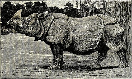 rhino java fotografia