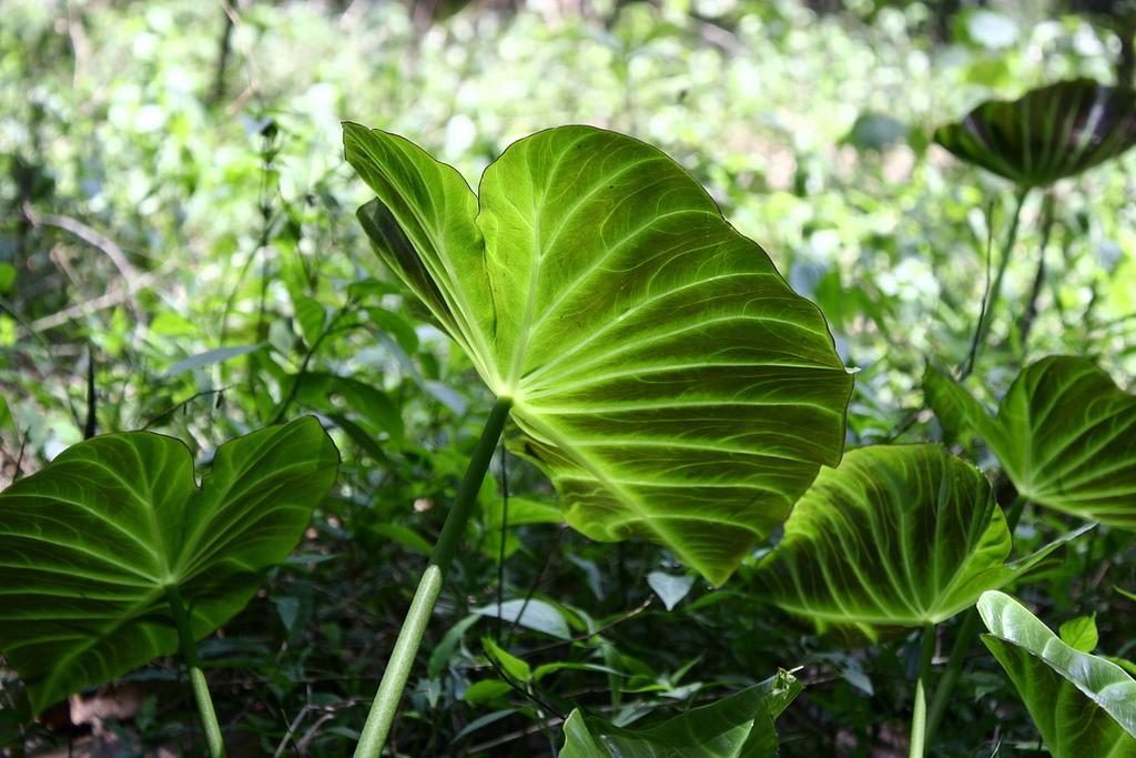 plants fotografia