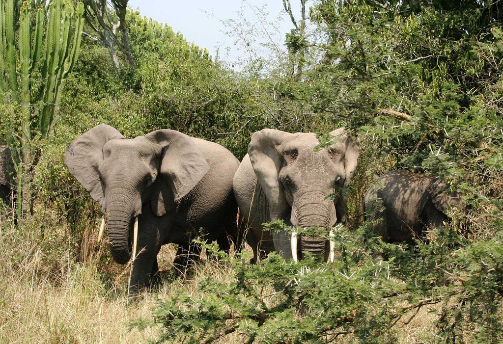 elephant fotografia