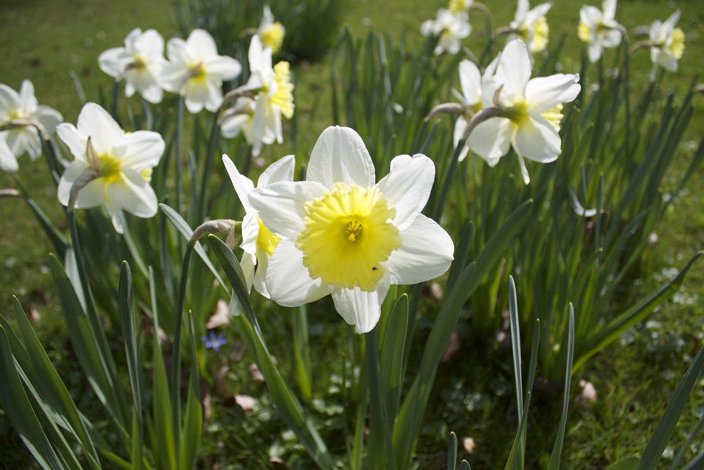 flower fotografia