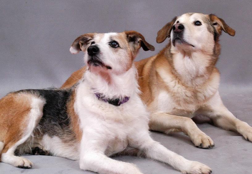 dogs fotografia