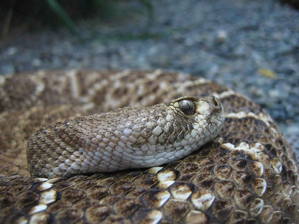 snakes fotografia