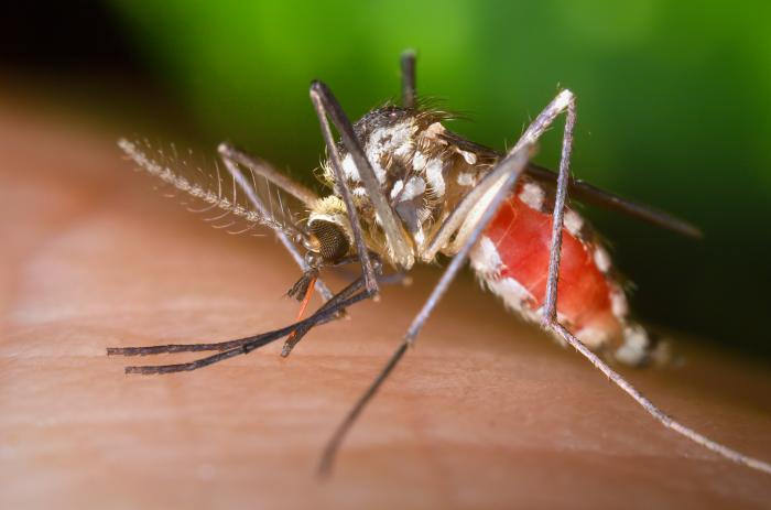 Mosquitoes fotografia