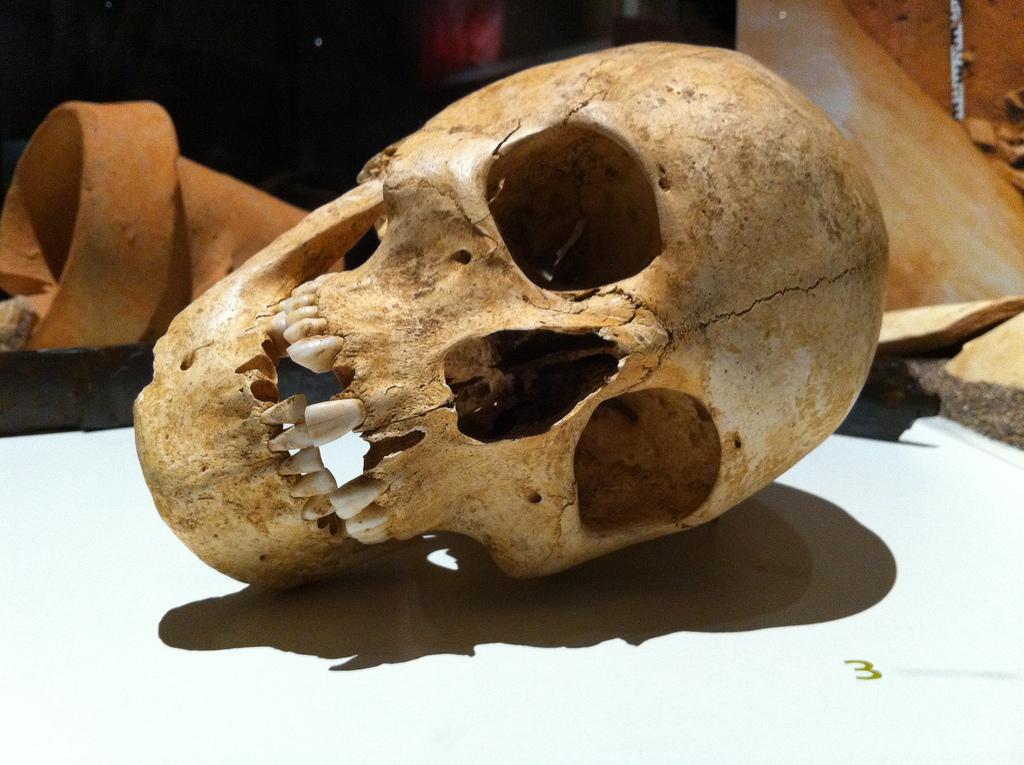 skull fotografia