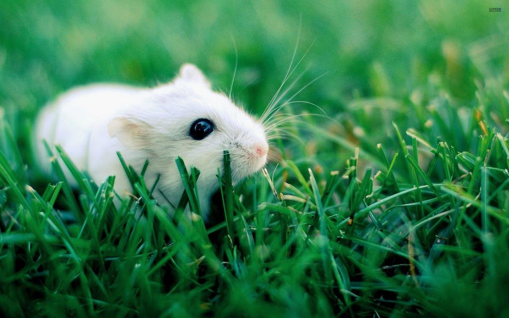 animals fotografia