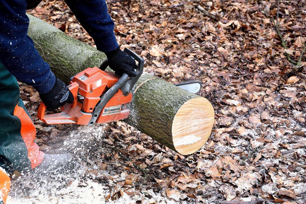 lumberjack fotografia