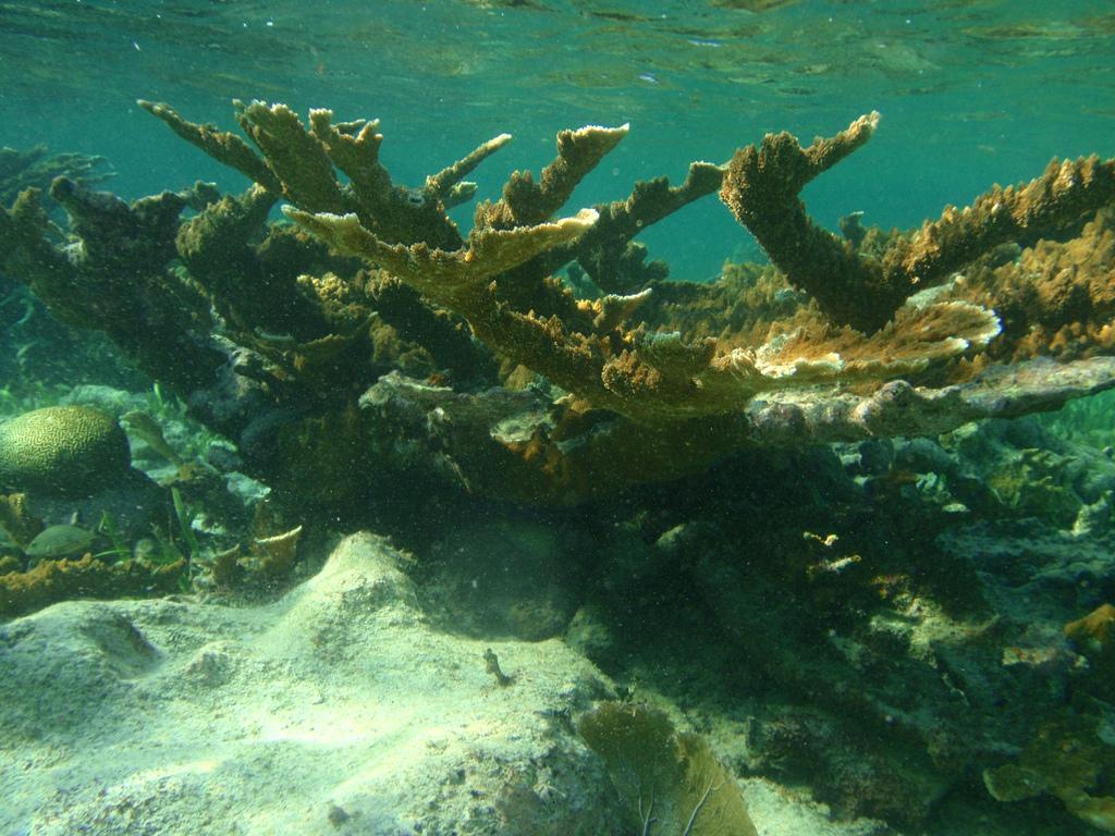 belise coral reef fotografia