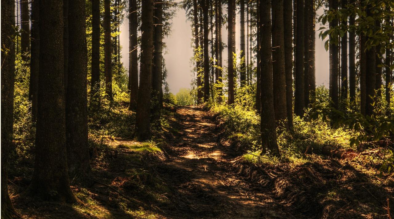 trees fotografia