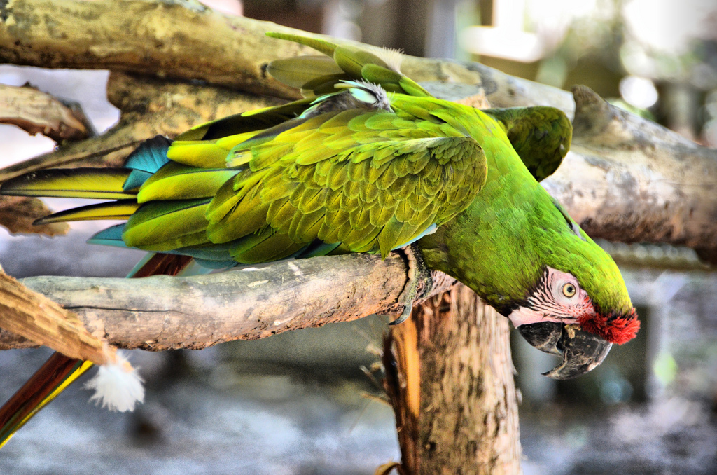 parrots fotografia