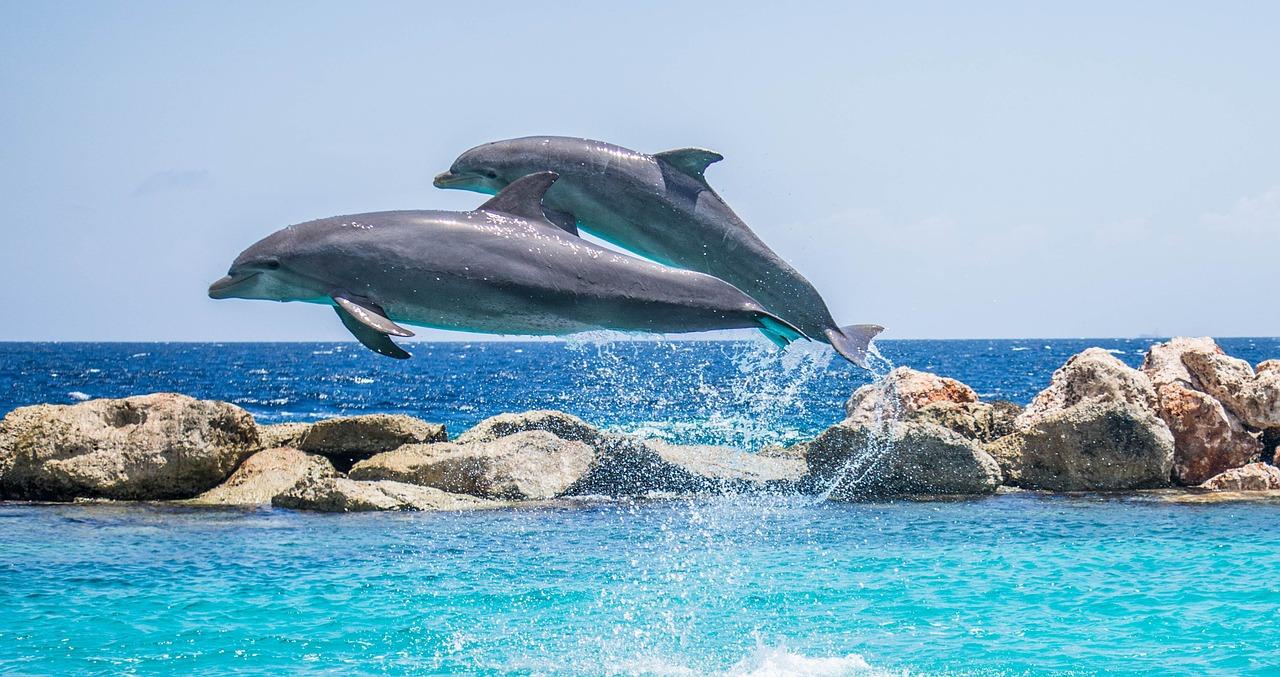 dolphin fotografia