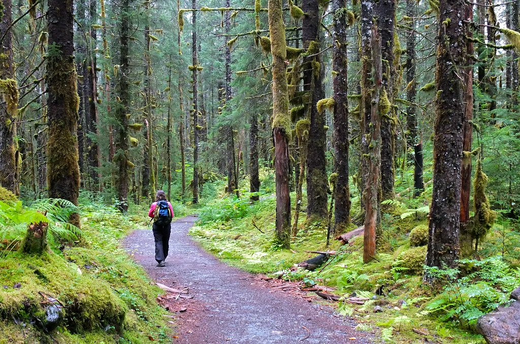 forest fotografia