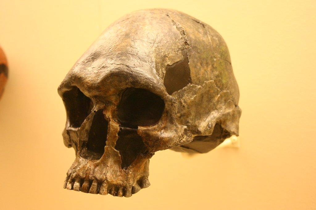 homo sapiens fotografia