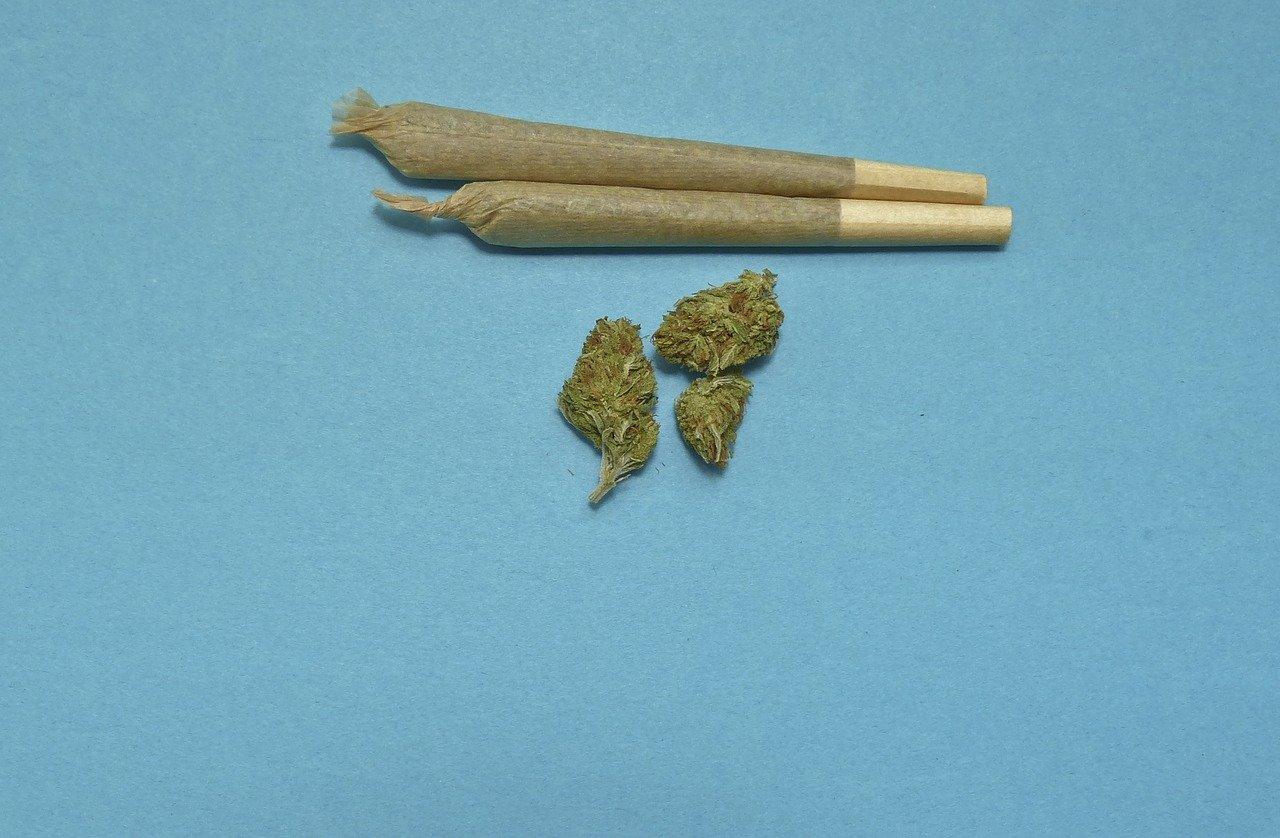 cannabis fotografia