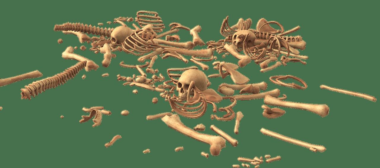 human bones fotografia