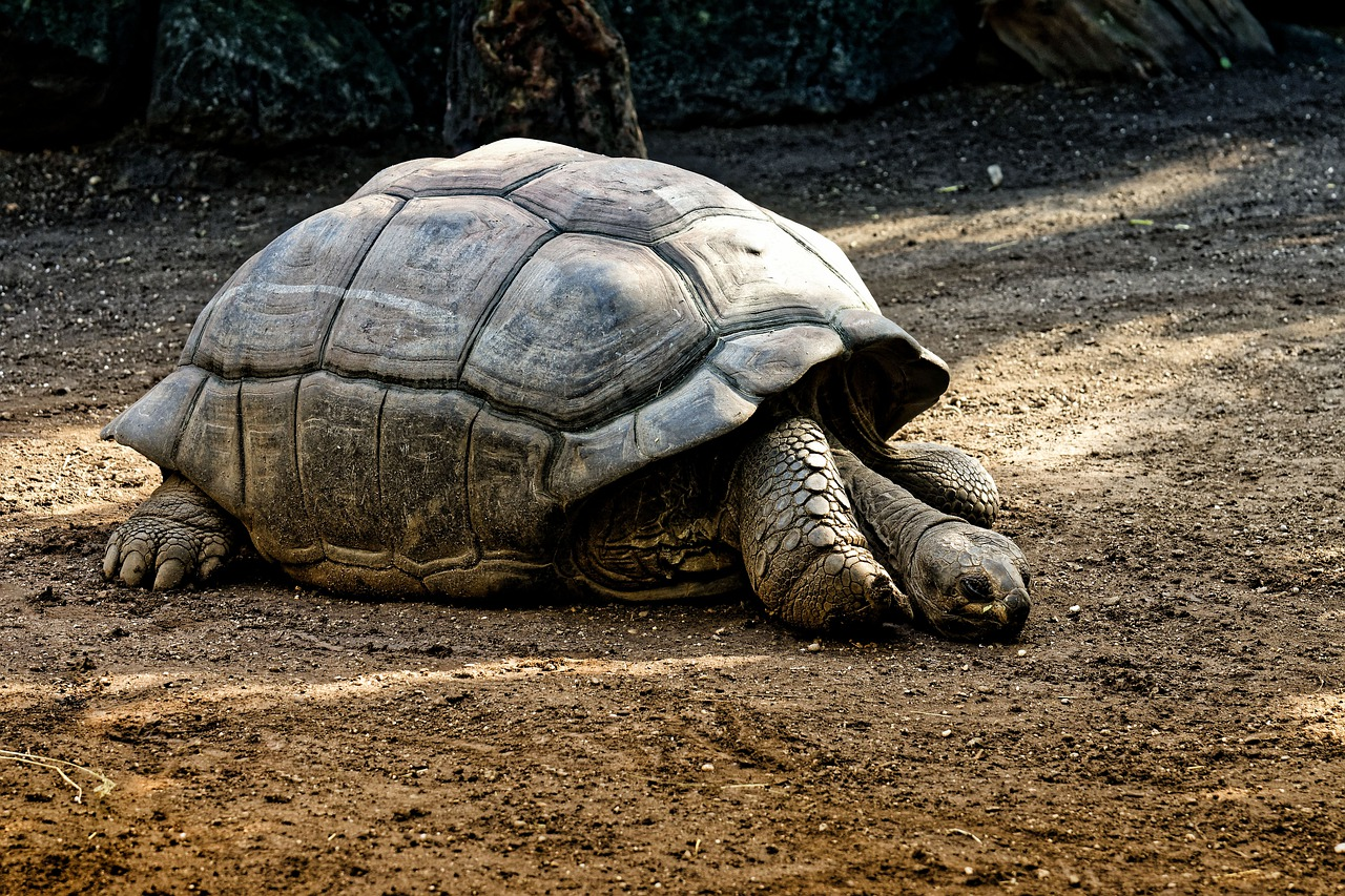 giant tortoise fotografia