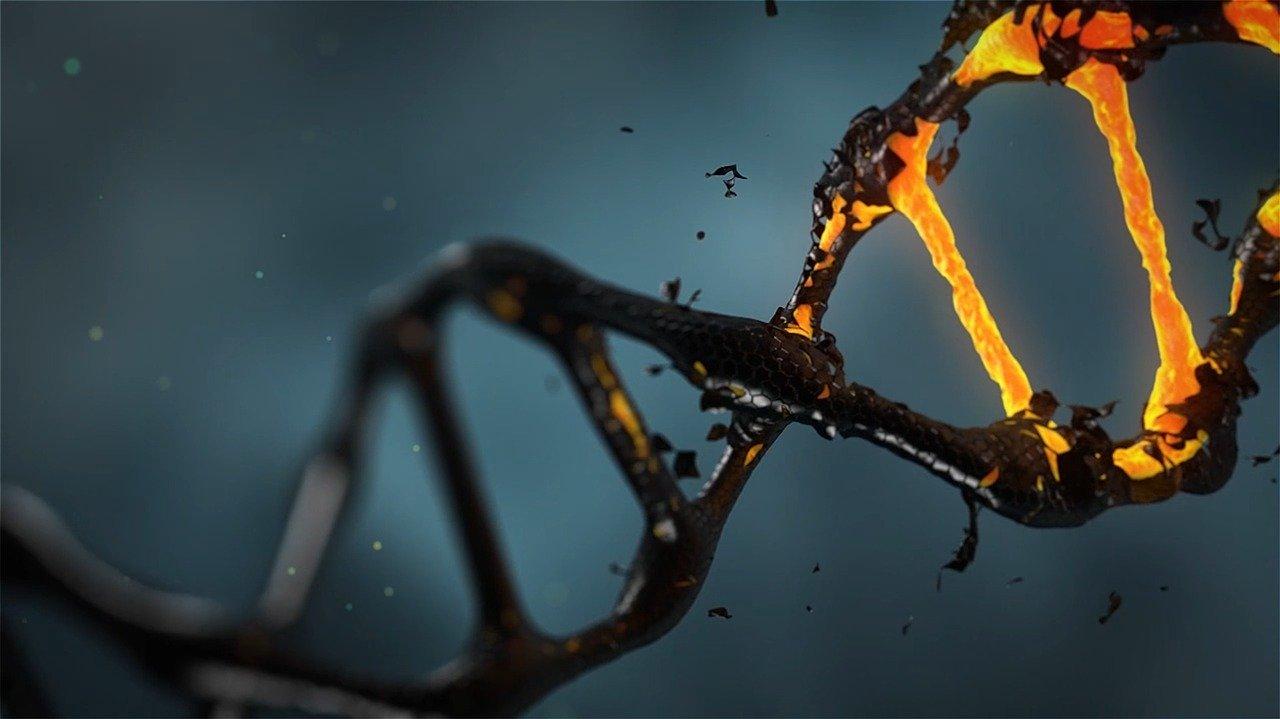 DNA fotografia